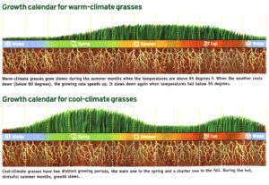 Cool Season Grass Growth Cycles