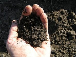 Sandy Loam Soil
